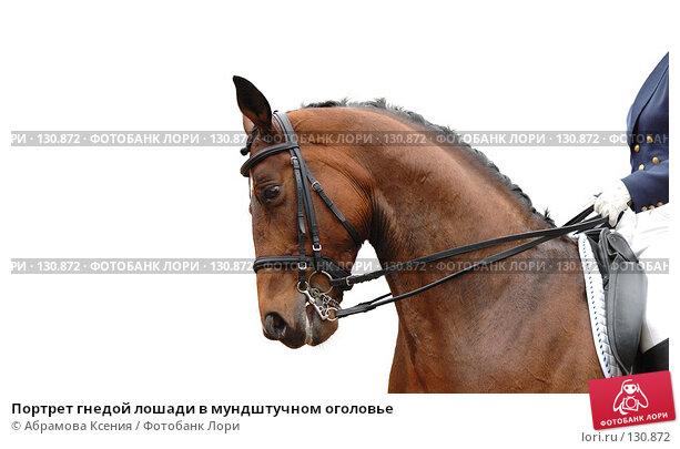 Портрет гнедой лошади в мундштучном оголовье, фото № 130872, снято 3 июня 2006 г. (c) Абрамова Ксения / Фотобанк Лори