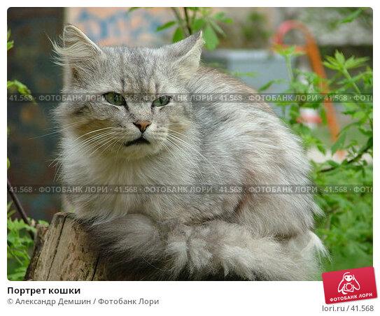 Портрет кошки, фото № 41568, снято 12 июня 2004 г. (c) Александр Демшин / Фотобанк Лори