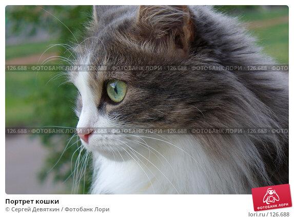 Портрет кошки, фото № 126688, снято 20 июня 2007 г. (c) Сергей Девяткин / Фотобанк Лори