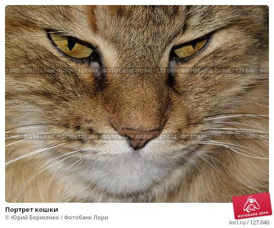 Портрет кошки, фото № 127040, снято 2 сентября 2007 г. (c) Юрий Борисенко / Фотобанк Лори