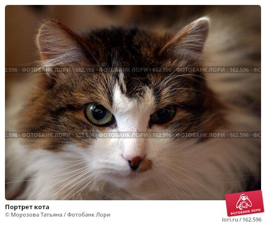 Портрет кота, фото № 162596, снято 9 марта 2006 г. (c) Морозова Татьяна / Фотобанк Лори
