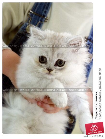 Портрет котенка, фото № 162608, снято 5 июля 2004 г. (c) Морозова Татьяна / Фотобанк Лори