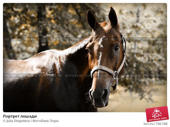 Портрет лошади, фото № 156168, снято 22 августа 2007 г. (c) Julia Shepeleva / Фотобанк Лори