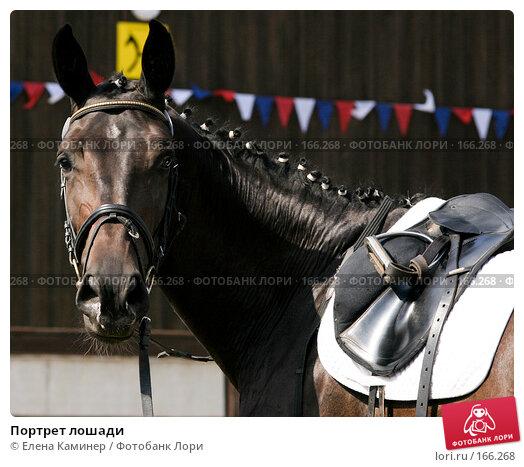Портрет лошади, фото № 166268, снято 25 августа 2007 г. (c) Елена Каминер / Фотобанк Лори