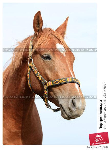 Купить «Портрет лошади», фото № 920328, снято 14 июня 2009 г. (c) Яна Королёва / Фотобанк Лори