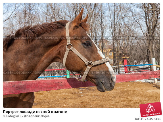Купить «Портрет лошади весной в загоне», фото № 4459436, снято 19 февраля 2019 г. (c) FotograFF / Фотобанк Лори