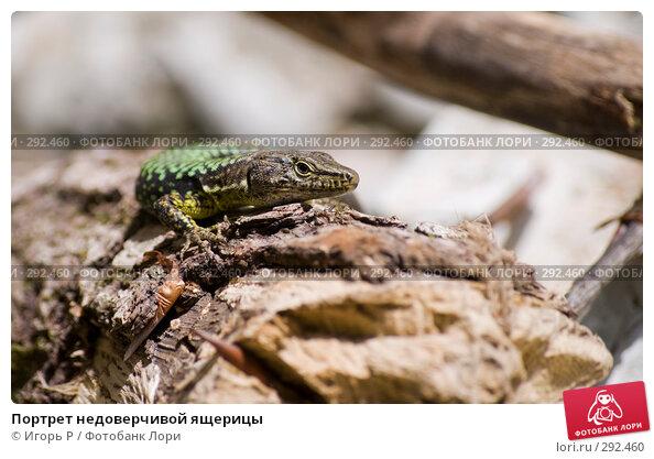 Портрет недоверчивой ящерицы, фото № 292460, снято 17 мая 2008 г. (c) Игорь Р / Фотобанк Лори