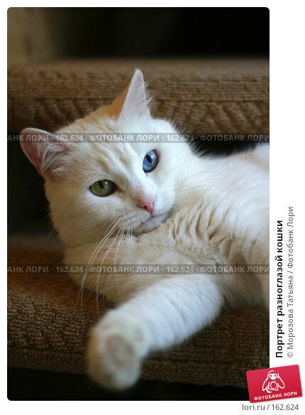 Портрет разноглазой кошки, фото № 162624, снято 15 января 2006 г. (c) Морозова Татьяна / Фотобанк Лори