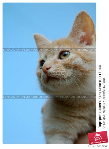 Портрет рыжего полосатого котёнка, фото № 60964, снято 8 июля 2007 г. (c) Валерия Потапова / Фотобанк Лори
