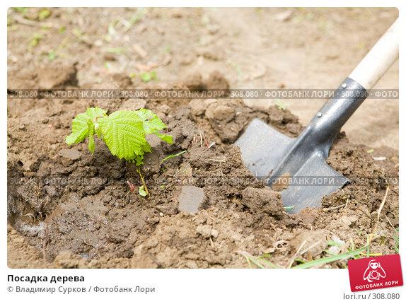 Посадка дерева, фото № 308080, снято 2 мая 2008 г. (c) Владимир Сурков / Фотобанк Лори