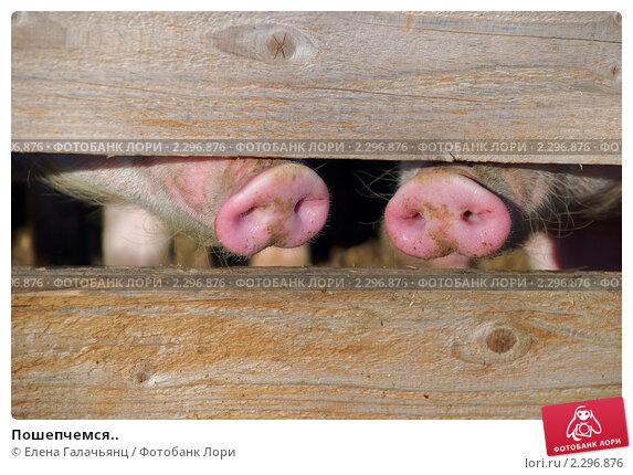 Купить «Пошепчемся..», фото № 2296876, снято 4 января 2011 г. (c) Елена Галачьянц / Фотобанк Лори