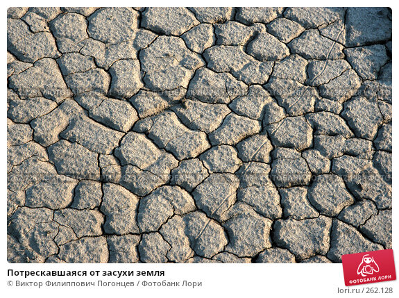 Потрескавшаяся от засухи земля, фото № 262128, снято 26 апреля 2005 г. (c) Виктор Филиппович Погонцев / Фотобанк Лори