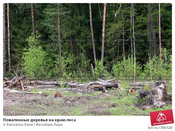 Поваленные деревья на краю леса, фото № 309520, снято 10 мая 2008 г. (c) Parmenov Pavel / Фотобанк Лори