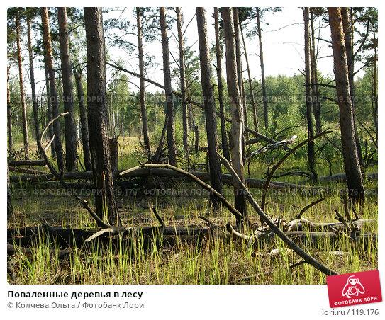 Поваленные деревья в лесу, фото № 119176, снято 13 августа 2007 г. (c) Колчева Ольга / Фотобанк Лори