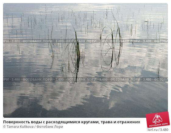Поверхность воды с расходящимися кругами, трава и отражения, фото № 3480, снято 20 августа 2005 г. (c) Tamara Kulikova / Фотобанк Лори