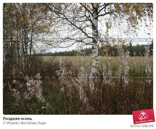 Поздняя осень, фото № 234316, снято 9 октября 2006 г. (c) VPutnik / Фотобанк Лори