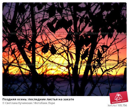 Поздняя осень: последние листья на закате, фото № 105756, снято 24 января 2017 г. (c) Светлана Кучинская / Фотобанк Лори