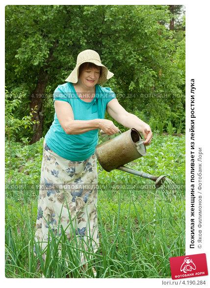 Купить «Пожилая женщина поливает из лейки ростки лука», фото № 4190284, снято 19 июня 2011 г. (c) Яков Филимонов / Фотобанк Лори