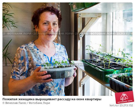 Пожилая женщина выращивает рассаду на окне квартиры, эксклюзивное фото № 23213132, снято 1 мая 2016 г. (c) Вячеслав Палес / Фотобанк Лори