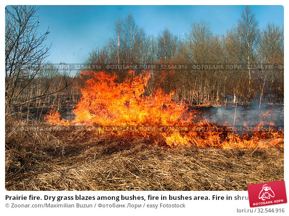Купить «Prairie fire. Dry grass blazes among bushes, fire in bushes area. Fire in shrub kills huge number small animals, especially insects. Climate change, increased frequency fires, destruction of forests», фото № 32544916, снято 7 декабря 2019 г. (c) easy Fotostock / Фотобанк Лори