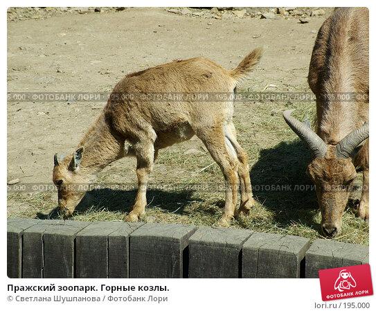 Пражский зоопарк. Горные козлы., фото № 195000, снято 9 мая 2006 г. (c) Светлана Шушпанова / Фотобанк Лори