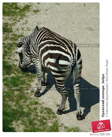 Пражский зоопарк. Зебра, фото № 200720, снято 9 мая 2006 г. (c) Светлана Шушпанова / Фотобанк Лори