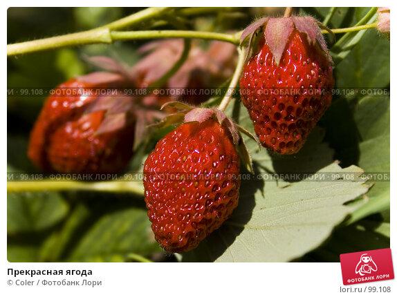 Прекрасная ягода, фото № 99108, снято 12 июня 2007 г. (c) Coler / Фотобанк Лори
