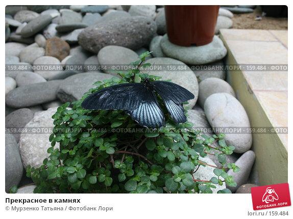 Прекрасное в камнях, фото № 159484, снято 5 мая 2007 г. (c) Мурзенко Татьяна / Фотобанк Лори