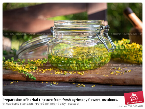 Preparation of herbal tincture from fresh agrimony flowers, outdoors. Стоковое фото, фотограф Madeleine Steinbach / easy Fotostock / Фотобанк Лори