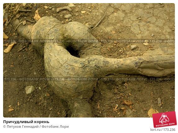 Причудливый корень, фото № 173236, снято 15 августа 2007 г. (c) Петухов Геннадий / Фотобанк Лори