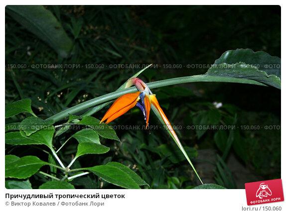 Причудливый тропический цветок, фото № 150060, снято 15 декабря 2007 г. (c) Виктор Ковалев / Фотобанк Лори