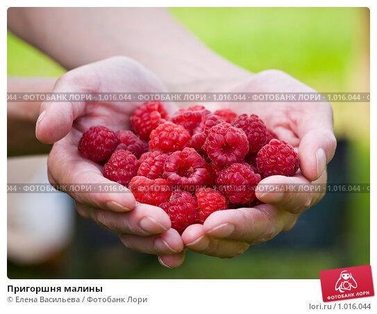 Купить «Пригоршня малины», фото № 1016044, снято 30 июля 2009 г. (c) Елена Васильева / Фотобанк Лори