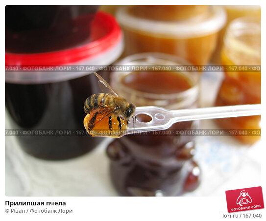 Прилипшая пчела, фото № 167040, снято 28 сентября 2007 г. (c) Иван / Фотобанк Лори