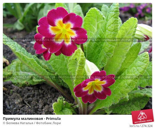Примула малиновая - Primula, фото № 274324, снято 27 мая 2006 г. (c) Беляева Наталья / Фотобанк Лори