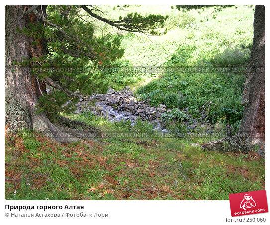 Природа горного Алтая, фото № 250060, снято 6 августа 2005 г. (c) Наталья Астахова / Фотобанк Лори