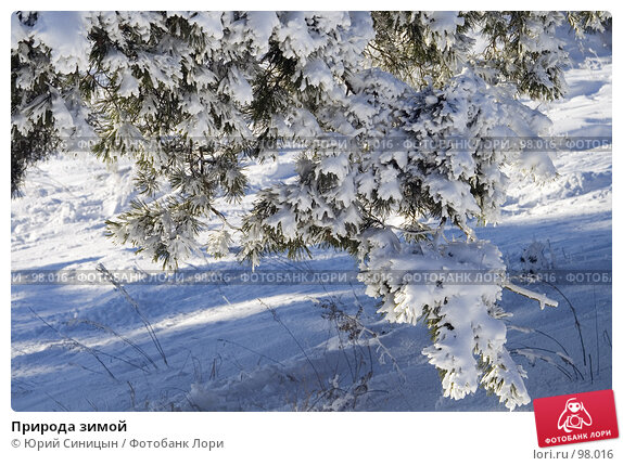 Природа зимой, фото № 98016, снято 12 февраля 2007 г. (c) Юрий Синицын / Фотобанк Лори