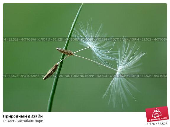 Природный дизайн, фото № 52528, снято 8 декабря 2016 г. (c) Олег / Фотобанк Лори