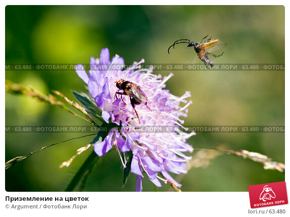 Приземление на цветок, фото № 63480, снято 7 июля 2007 г. (c) Argument / Фотобанк Лори