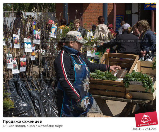 Продажа саженцев, фото № 281204, снято 8 мая 2008 г. (c) Яков Филимонов / Фотобанк Лори