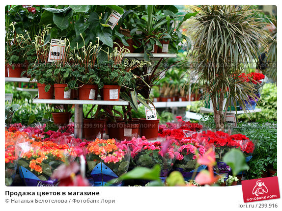 Продажа цветов в магазине, фото № 299916, снято 1 мая 2008 г. (c) Наталья Белотелова / Фотобанк Лори