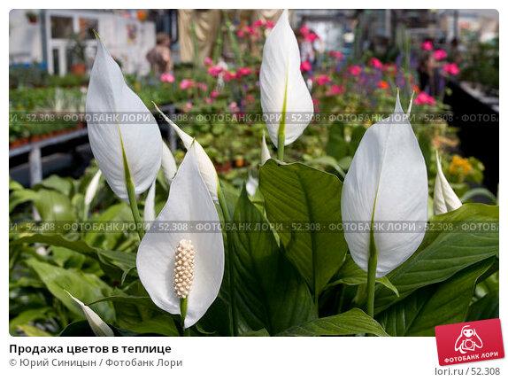 Продажа цветов в теплице, фото № 52308, снято 18 мая 2007 г. (c) Юрий Синицын / Фотобанк Лори