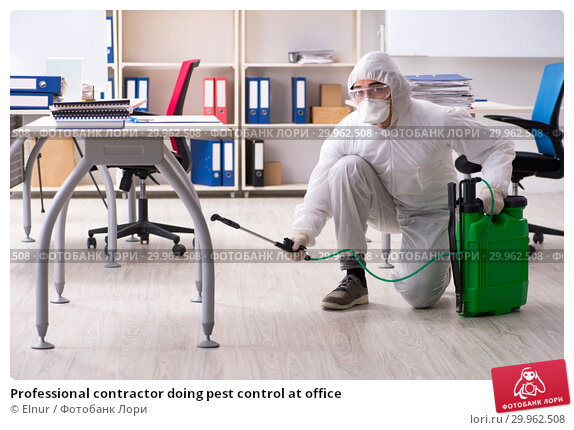 Professional contractor doing pest control at office. Стоковое фото, фотограф Elnur / Фотобанк Лори