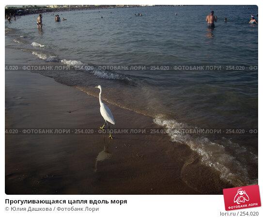 Прогуливающаяся цапля вдоль моря, фото № 254020, снято 21 октября 2007 г. (c) Юлия Дашкова / Фотобанк Лори