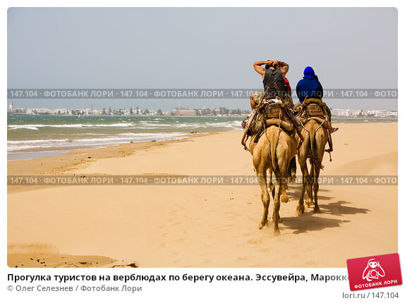 Прогулка туристов на верблюдах по берегу океана. Эссувейра, Марокко., фото № 147104, снято 1 августа 2007 г. (c) Олег Селезнев / Фотобанк Лори