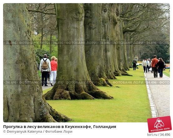 Прогулка в лесу великанов в Кеукенхофе, Голландия, фото № 34496, снято 11 апреля 2007 г. (c) Demyanyuk Kateryna / Фотобанк Лори
