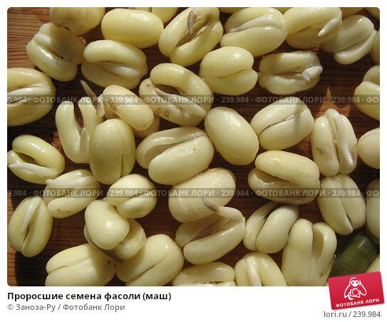 Проросшие семена фасоли (маш), фото № 239984, снято 29 марта 2008 г. (c) Заноза-Ру / Фотобанк Лори