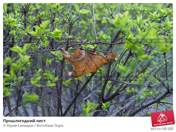 Прошлогодний лист, фото № 60292, снято 3 апреля 2007 г. (c) Юрий Синицын / Фотобанк Лори