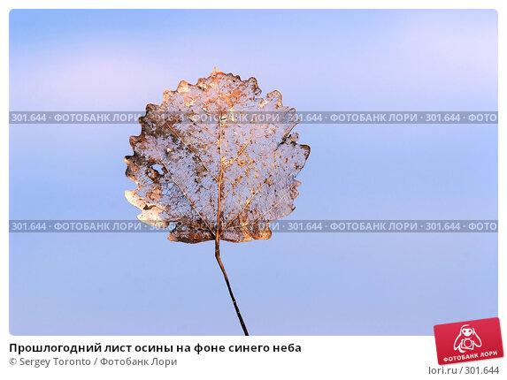 Прошлогодний лист осины на фоне синего неба, фото № 301644, снято 11 мая 2008 г. (c) Sergey Toronto / Фотобанк Лори