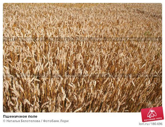Пшеничное поле, фото № 180696, снято 26 августа 2007 г. (c) Наталья Белотелова / Фотобанк Лори
