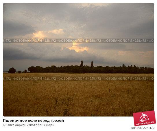 Пшеничное поле перед грозой, фото № 228472, снято 20 июня 2007 г. (c) Олег Хархан / Фотобанк Лори